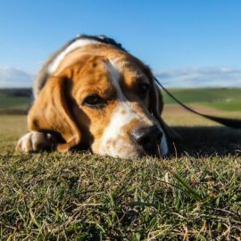 7 Common Questions when Coping with the Loss of a Pet